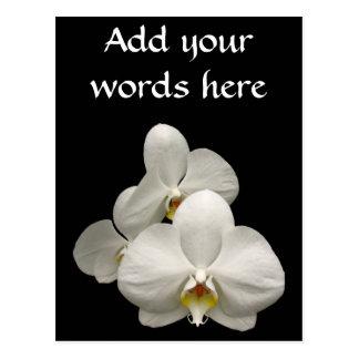 White Orchids Postcard