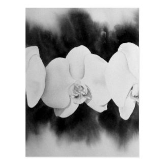 White Orchids Postcard