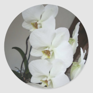 white orchids stickers