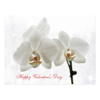 White Orchids Valentine's card