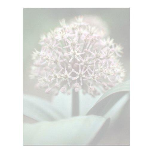 white Ornamental Garlic, (Allium Karataviense) flo Personalized Letterhead