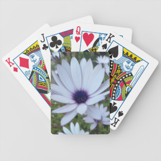 White Osteospermum Flower Daisy With Purple Hue Bicycle Playing Cards