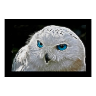 White Owl Bird Photo Nature Wall Poster