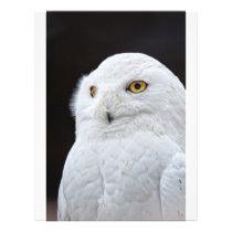 White Owl Flyer