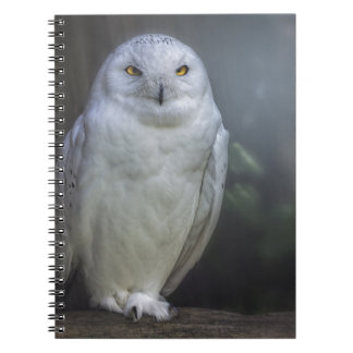 White Owl in Night Notebook