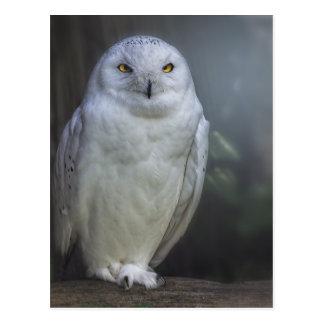 White Owl in Night Postcard