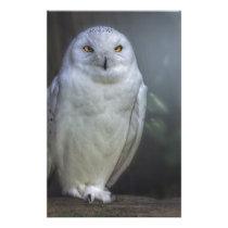 White Owl in Night Stationery