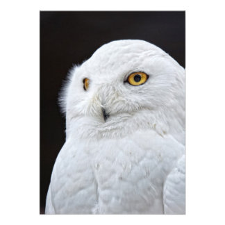 White Owl Card