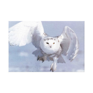 White Owl (Parasitic Twin) Canvas Print
