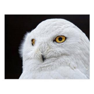 White Owl Postcard