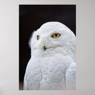 White Owl Print