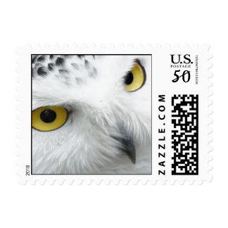 white owl stamp