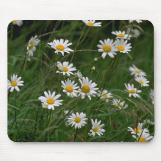 white Oxeye daisy flowers Mouse Pad