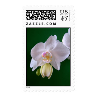 White - pale blue Orchid Postage