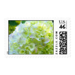 White Pastel Yellow Pink Hydrangea Flowers stamps