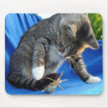 White Pawed Tabby Cat Playing With Winged Insect Mouse Pad