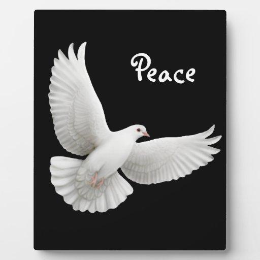 white dove peace wwwimgkidcom the image kid has it