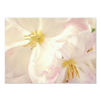 White & Peach Parrot Tulips Background Customized Card