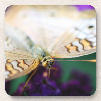 White Peacock Anartia Jatrophae Drink Coaster