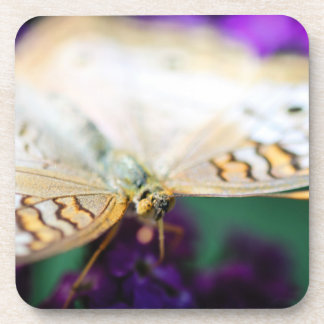 White Peacock Anartia Jatrophae Beverage Coaster