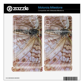 White Peacock Anartia Jatrophae Motorola Milestone Decals