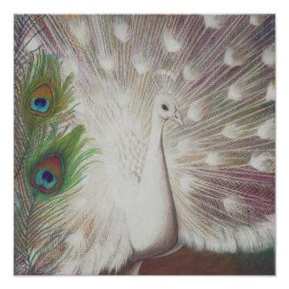 White Peacock and Green Peacock Feather art Print
