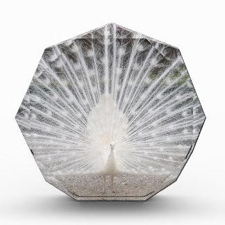 white peacock award