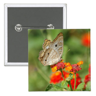 White Peacock Butterfly Button
