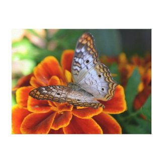 White Peacock Butterfly Canvas Wrap Canvas Print