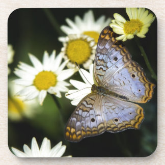 White Peacock Butterfly Coaster