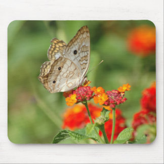 White Peacock Butterfly Mousepad