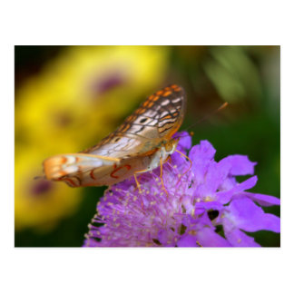 White peacock butterfly on purple bloom postcard