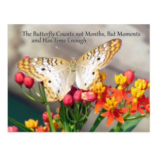 White Peacock Butterfly Quote Postcard