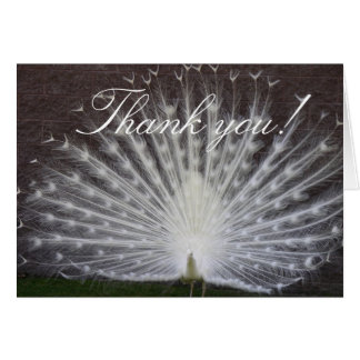 White Peacock Stationery Note Card