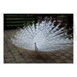 White Peacock Card