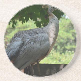 White Peacock Coasters