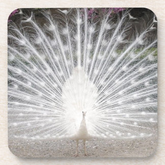 white peacock beverage coaster