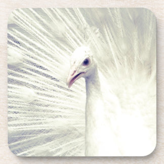 White Peacock Fine Art Photography Coaster