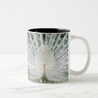 White Peacock Two-Tone Coffee Mug
