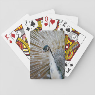 White Peacock Playing Cards
