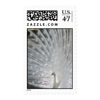 White Peacock Postage Stamp