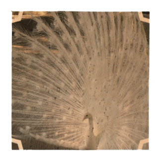 White Peacock Drink Coaster