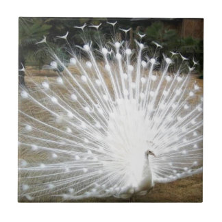 White Peacock Tile