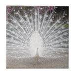 white peacock tiles