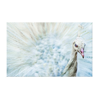 White Peacock With Open Wheel Portrait Canvas Canvas Print