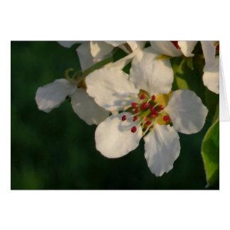 White Pear Blossom Card