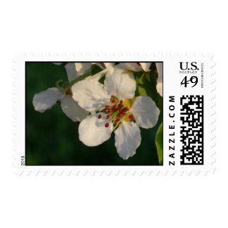 White Pear Blossom Postage