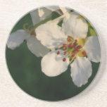 White Pear Blossom Sandstone Coaster