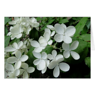 White Pee Gee Hydrangea Flowers Blank Note Card