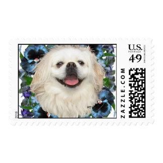 White Pekingese with Pansies Postage Stamps